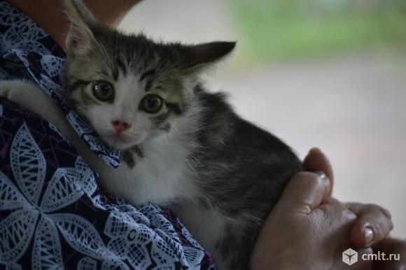 Котенок - мальчик - в хорошие руки