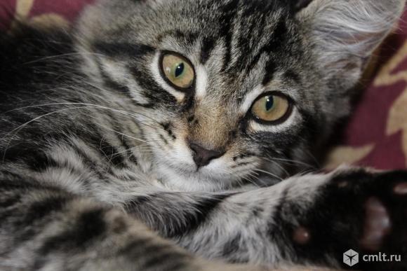 Котенок Тиг ищет дом