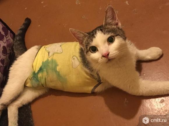 Кошка, 12 месяцев, стерилизованная