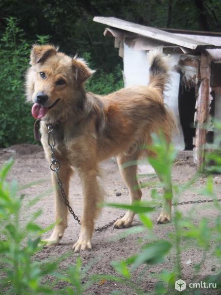 Солнечный пес Лучик. Фото 1.