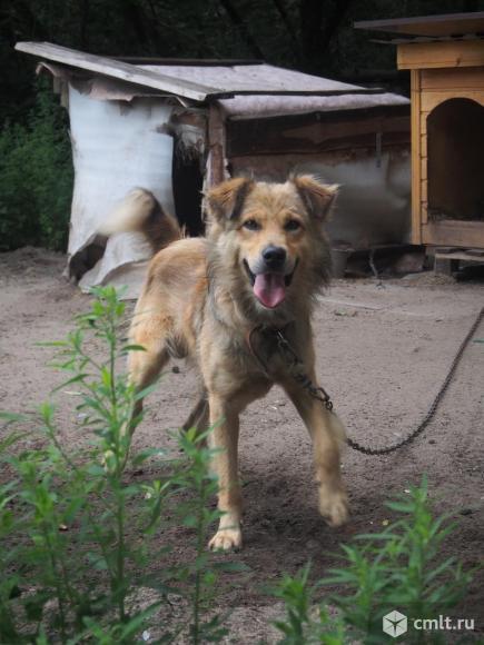 Солнечный пес Лучик. Фото 4.