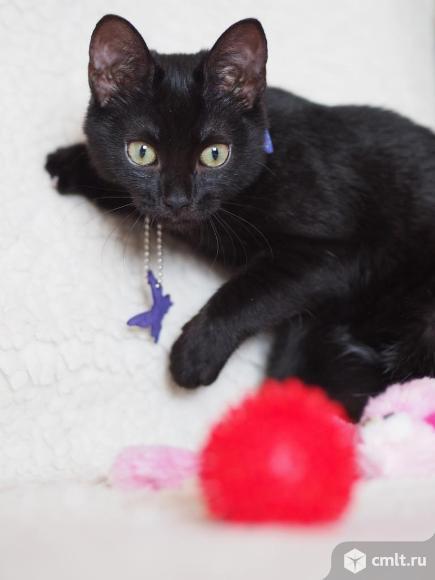 Очень весёлый и игривый котенок