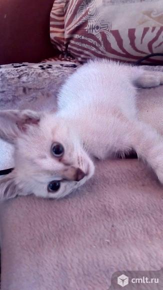 Котеночек в добрые руки!