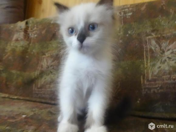 Хорошенький котенок