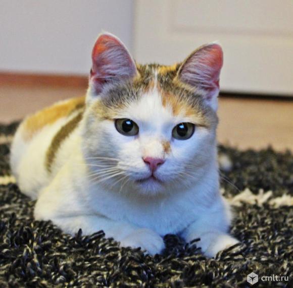 Кошечка, о который Вы только мечтали, - Тося!