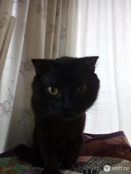 Найден кот. Фото 2.