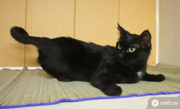 Скромная кошка Маша