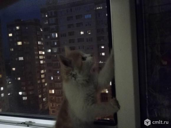 Отдам бесплатно котёнка в добрые руки!!!