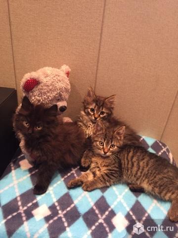 Очаровательные двухмесячные котята мечтают обрести дом!