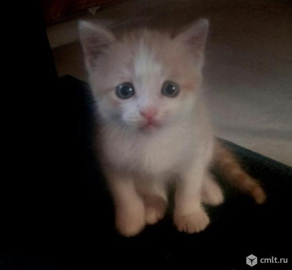 Котёнок в дар. Фото 1.