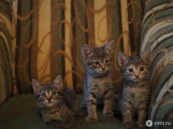 Полосатые котята ищут ответственные руки