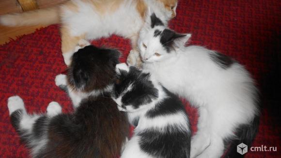 3 котят  даром в хорошие руки