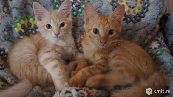 Персик и Абрикосик