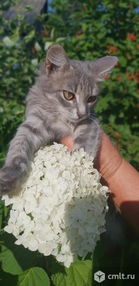 Котенок в дар. Фото 4.
