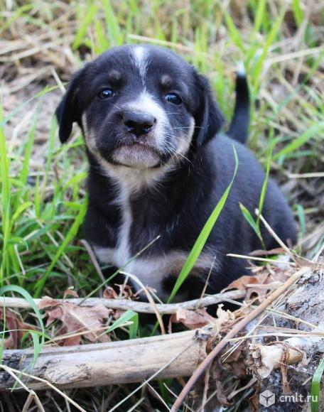 Милые щенки в дар. Фото 1.