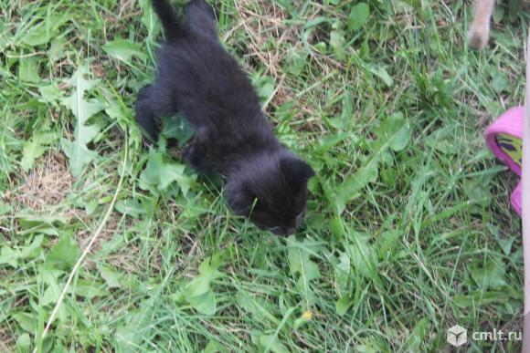 Котята в добрые руки. Фото 10.