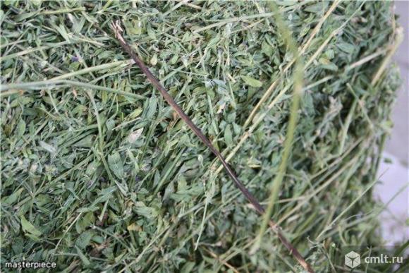 Люцерна, сено луговое, измельченное сено. Фото 2.
