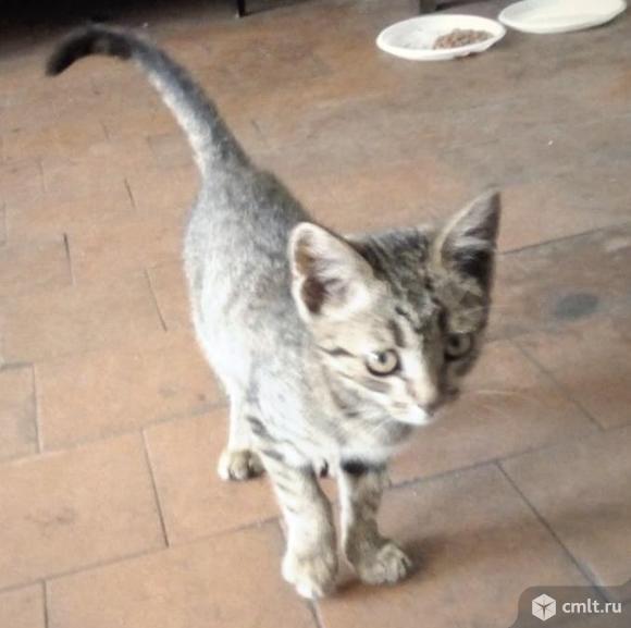 Полосатый котенок  даром в хорошие руки