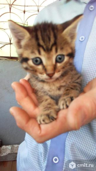 Котята ищут дом и ответственных хозяев