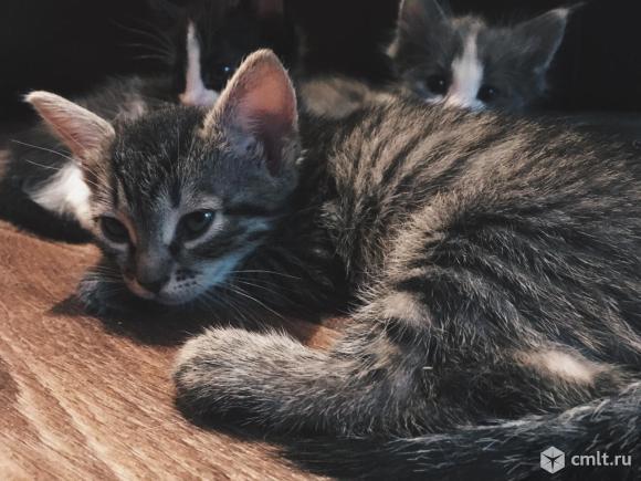 Отдам котят в добрые руки. Фото 4.