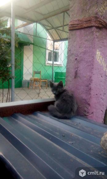 Отдам котенка. Фото 5.