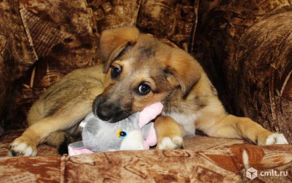 щенок тимур