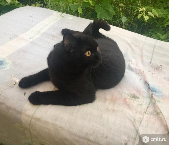 Пропала Кошка!!!