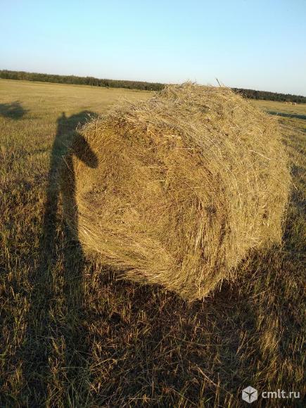 Продам сено в рулонах по 300 кг возможна доставка. Фото 1.