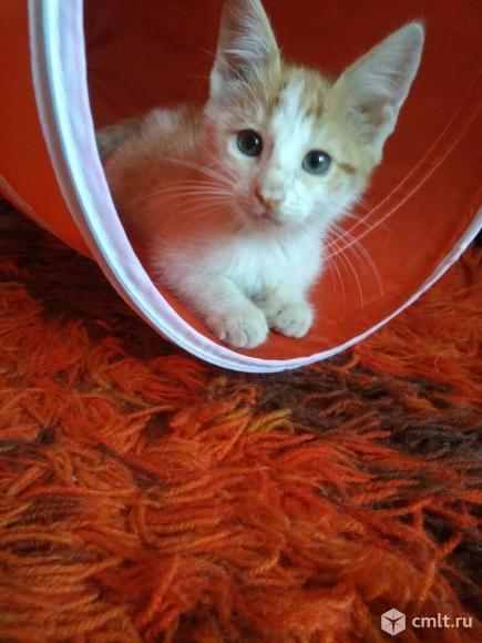 Весёлый котёнок Фёдор
