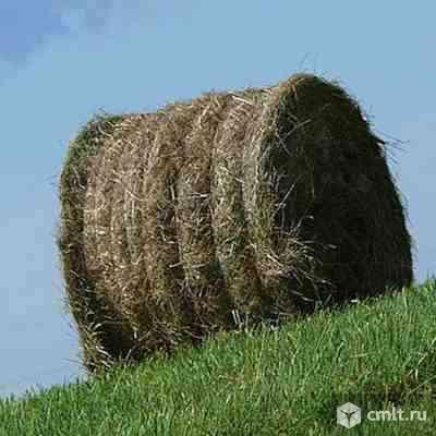 Сено луговое сеяное клевер
