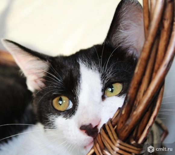 Котята в дар 3 месяца