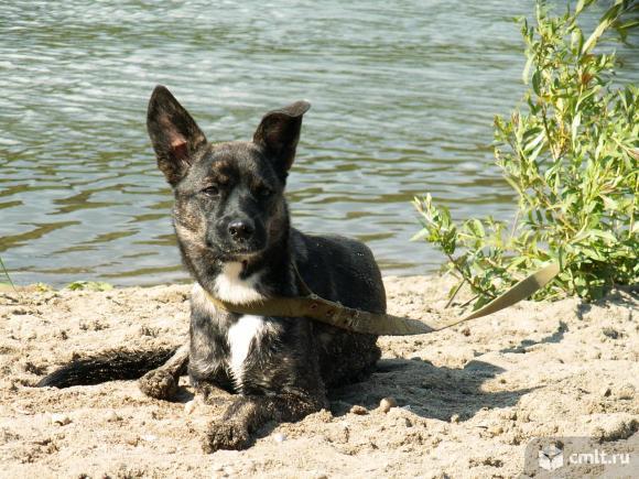 Стерилизованная собачка в дар. Фото 1.