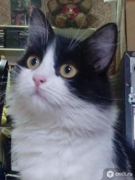 Ангорская кошка ищет дом