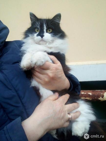Кошка-мышеловка отдается в частный дом!