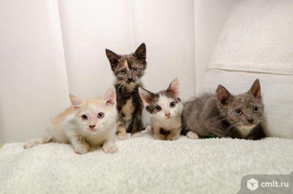 Ищут дом котята, 3 девочки и 1 мальчик, 2,5 мес