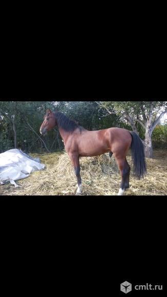 Конь. Фото 1.