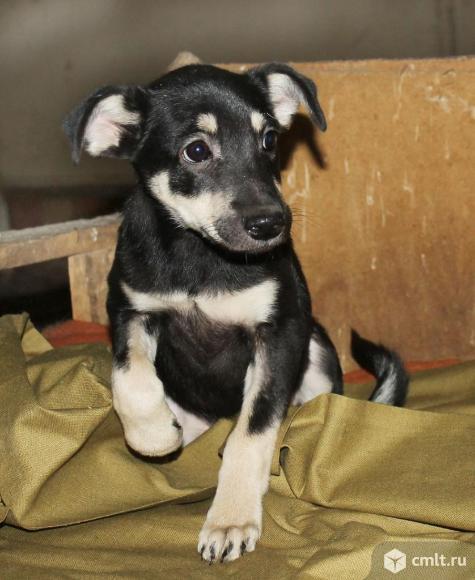 Миниатюрный   щенок Черничка. Фото 2.