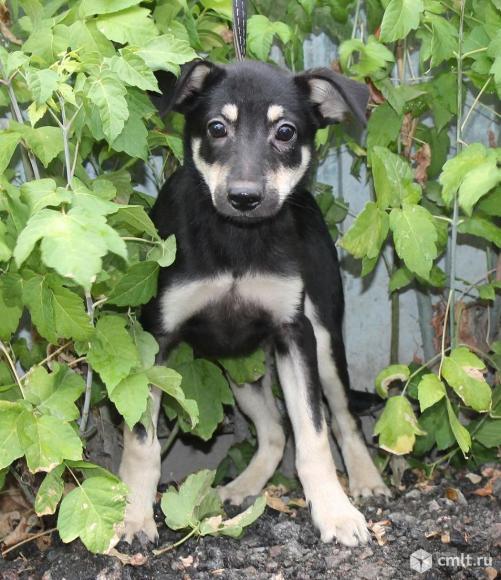 Миниатюрный   щенок Черничка. Фото 1.