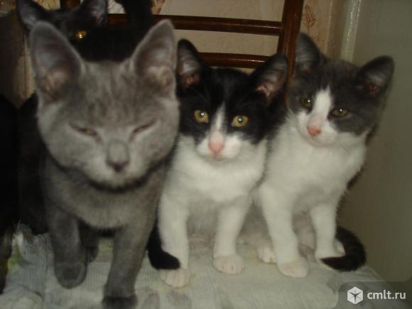 Чудесные домашние котятки - в надежные руки