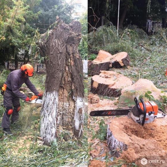 Спиливание деревьев   ( аварийных ) в Воронеже. Фото 1.