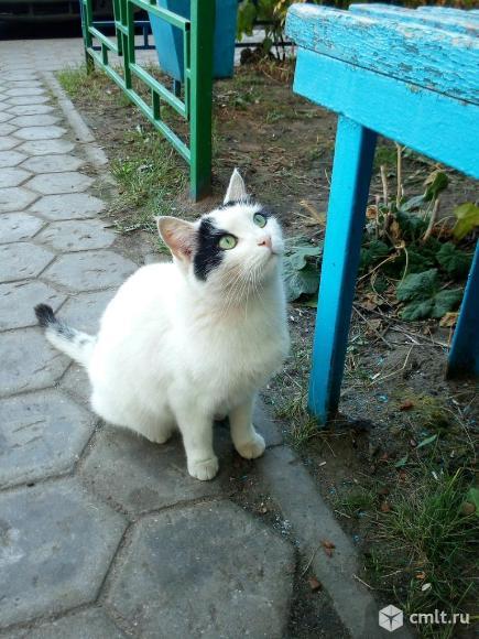 Коту нужен дом. Фото 1.