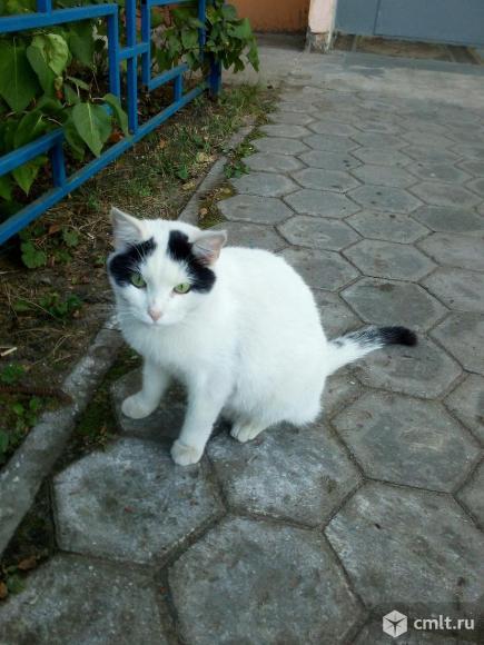 Коту нужен дом. Фото 3.