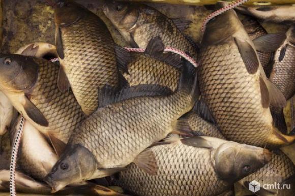 Водитель на ГАЗель по реализации живой рыбы для работы на рынках.. Фото 1.