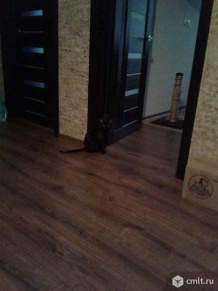 Коричневый котенок в хорошие руки. Фото 2.