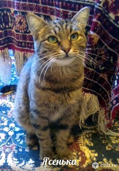 Кошечка Яся ищет дом. Фото 3.