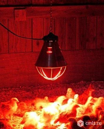 Лампа икзк Е27 215-225-250. Фото 2.