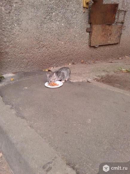 Котята  в  добрые  руки. Фото 9.