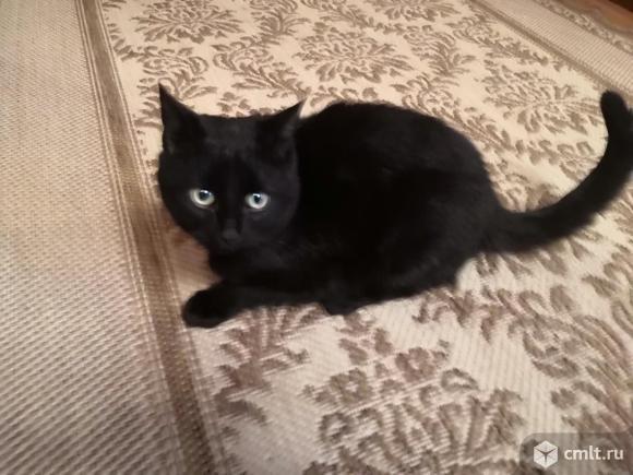 Подарю котят!. Фото 6.
