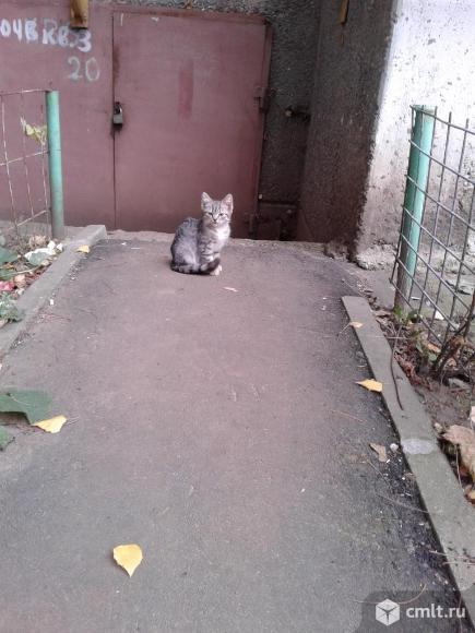 Серый  котенок   в  добрые  руки. Фото 1.