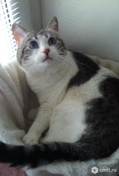 Барбара с васильковыми глазами. Фото 1.